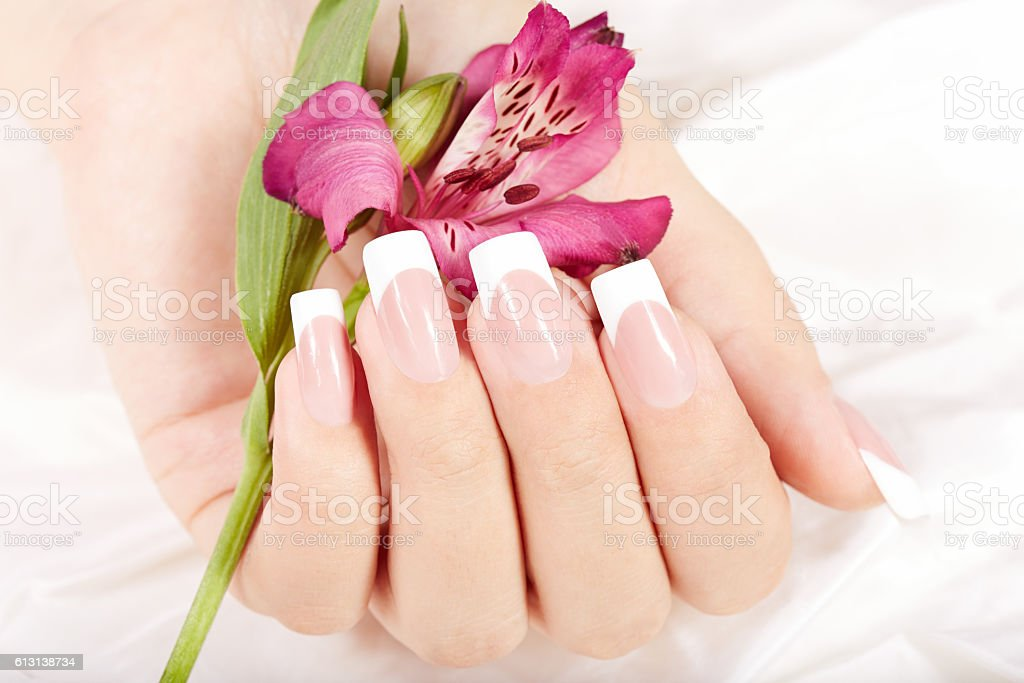 Hand with long artificial french manicured nails and Alstroemeria...