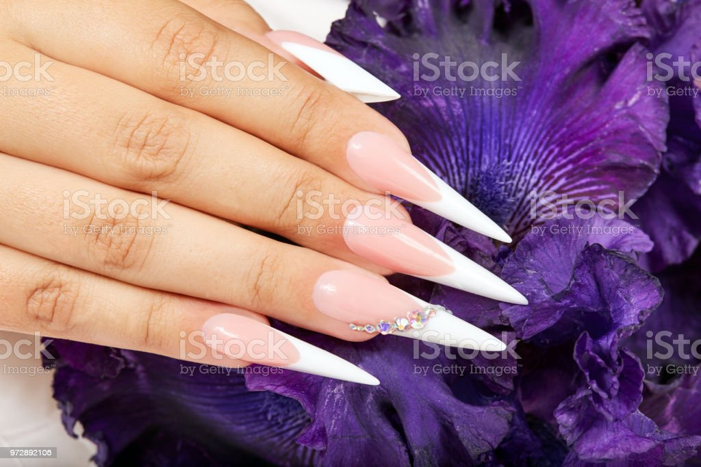 Hand with long artificial french manicured nails and a purple Iris...