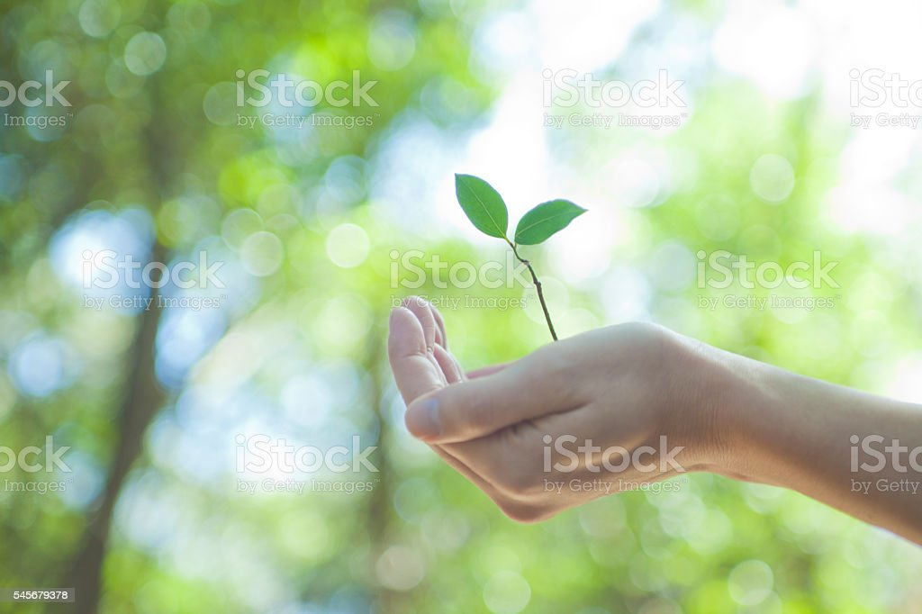 Hand with sprout stock photo