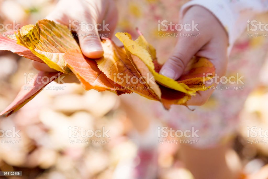 落葉的手 免版稅 stock photo