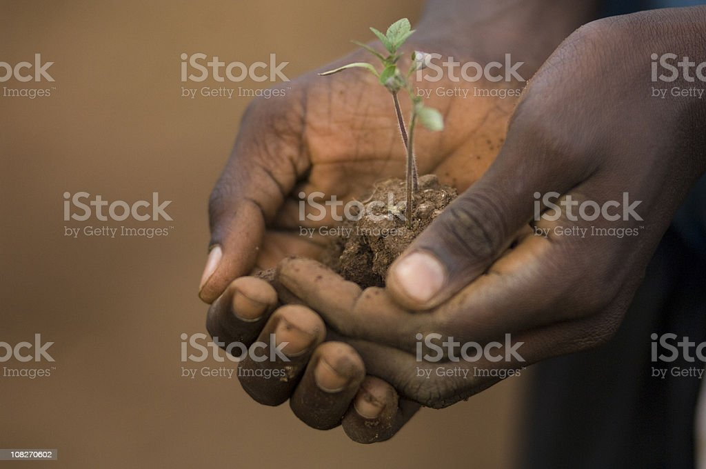 Hand with tomato plant, foto