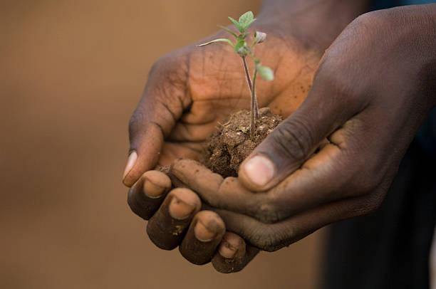 Hand with tomato plant, stock photo