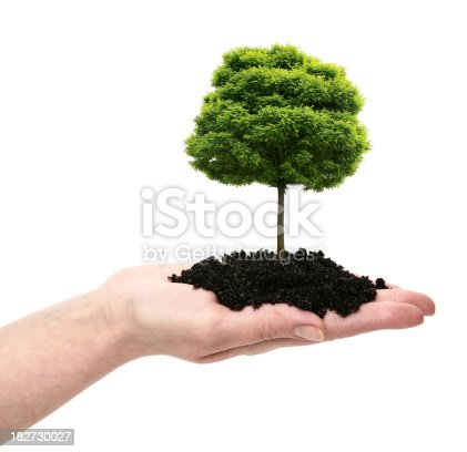 Woman's Hand with Tree