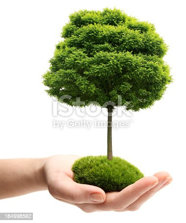 Woman's Hand with Tree: