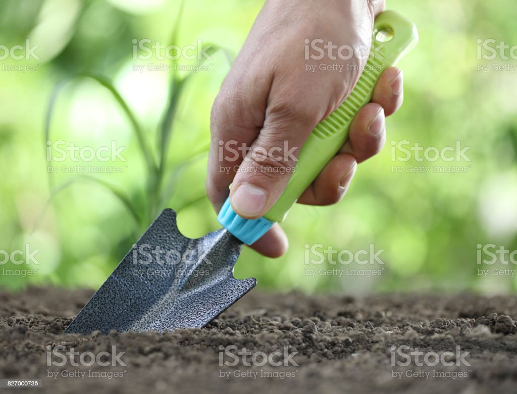 hand works the soil with tool, close up