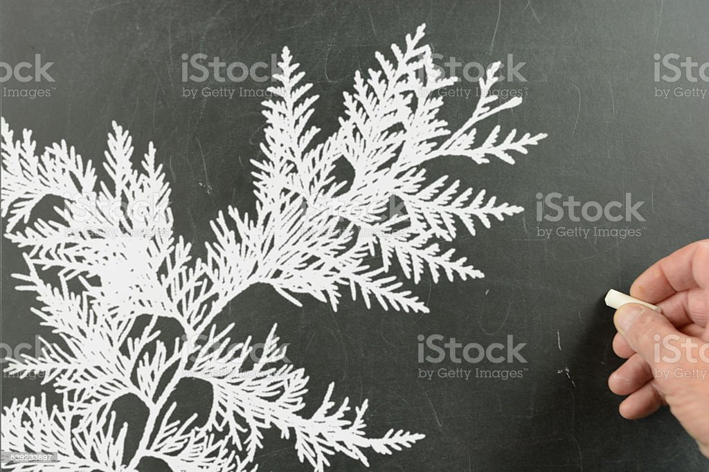 Hand writing on a blackboard- branch of a cedar tree. royalty-free stock photo