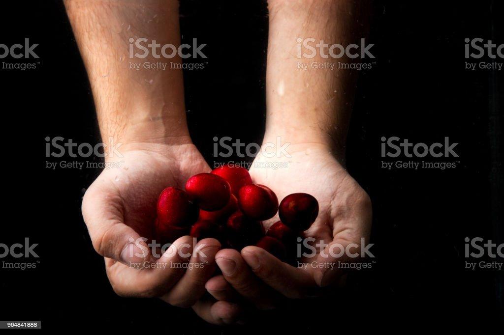 Handful Cherry royalty-free stock photo