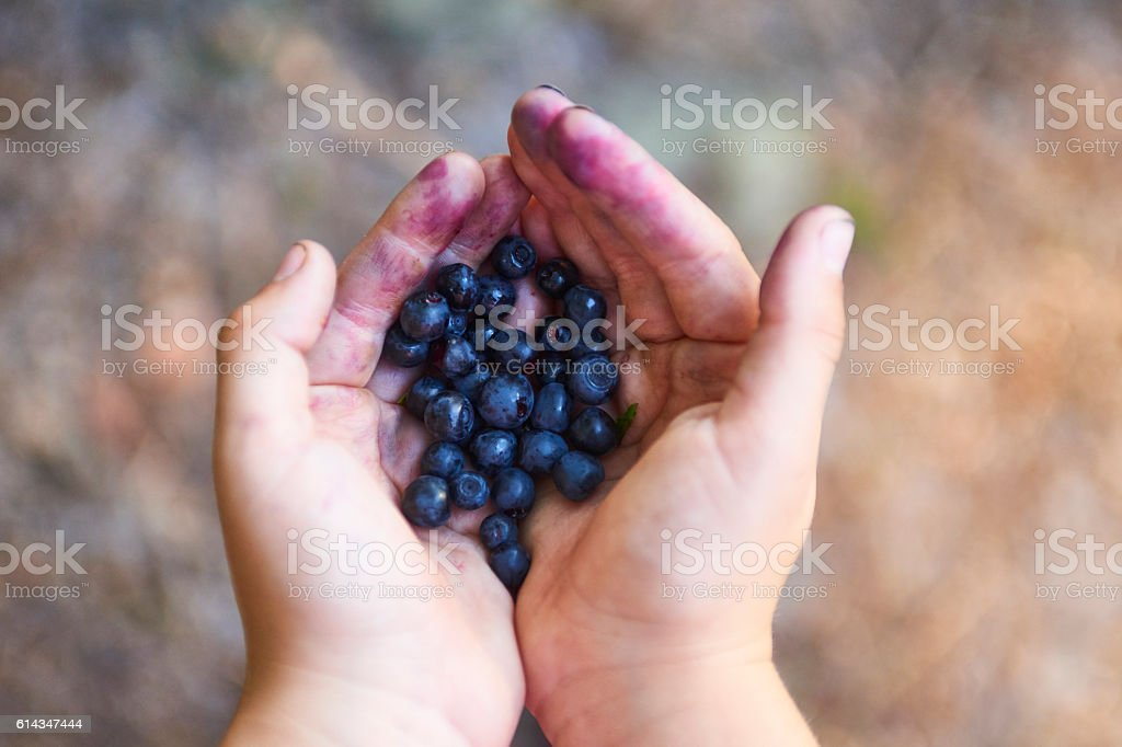 Handful of blueberries stock photo