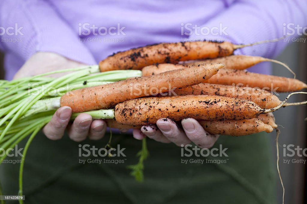 Handful of Carrots stock photo