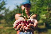 Handful of cherry fruit.