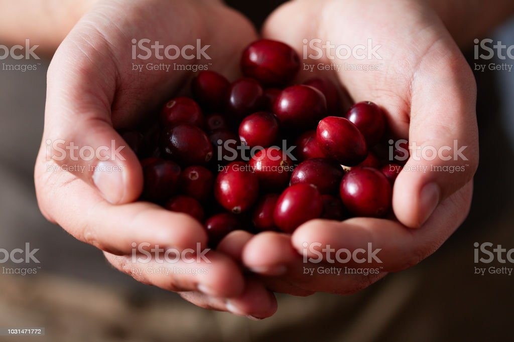 Handful Of Cranberries stock photo