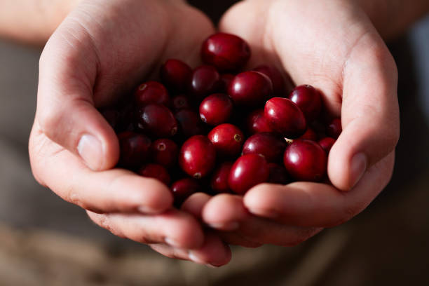 Handful Of Cranberries stock photo