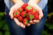 おいしい赤いイチゴの一握り