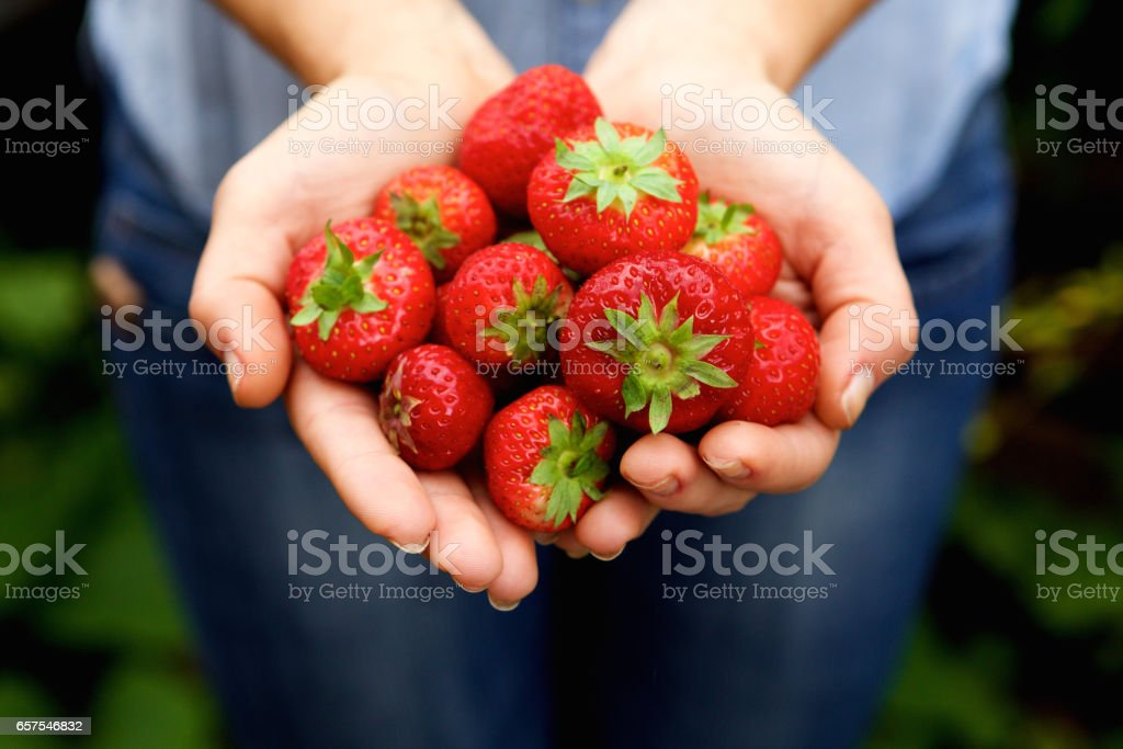 Handful of delicious red strawberries stock photo