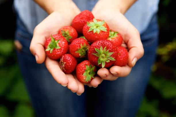 Handvol heerlijke rode aardbeien foto