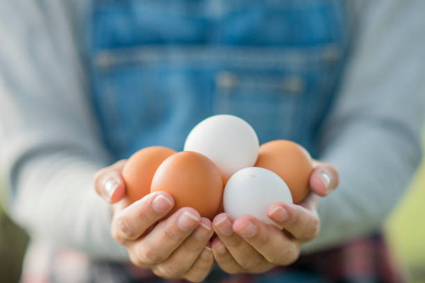 Handful of Eggs A female Caucasian farmer is standing in her field. She is holding a handful of eggs. bib overalls stock pictures, royalty-free photos & images