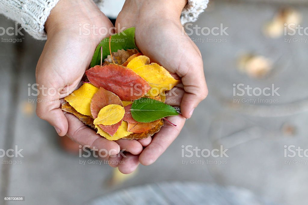 Handful of Leaves stock photo
