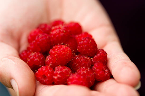 Handful of raspberries stock photo