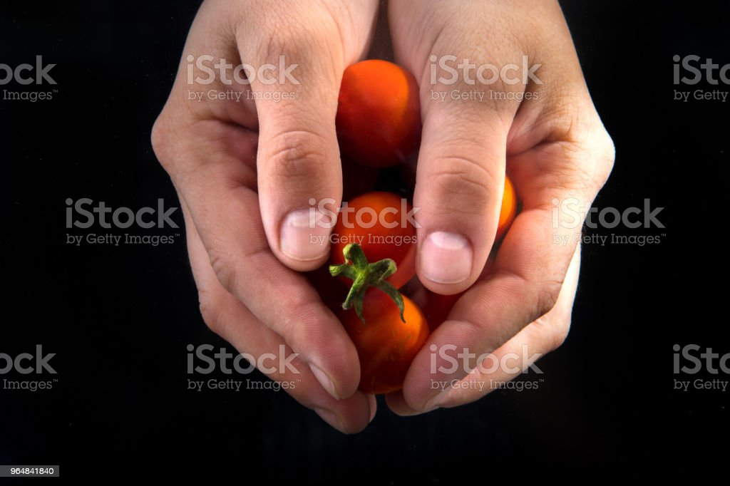 Handful tomatoes royalty-free stock photo