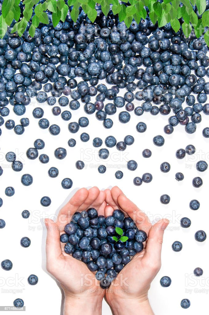 Handfull of blueberries in the center stock photo