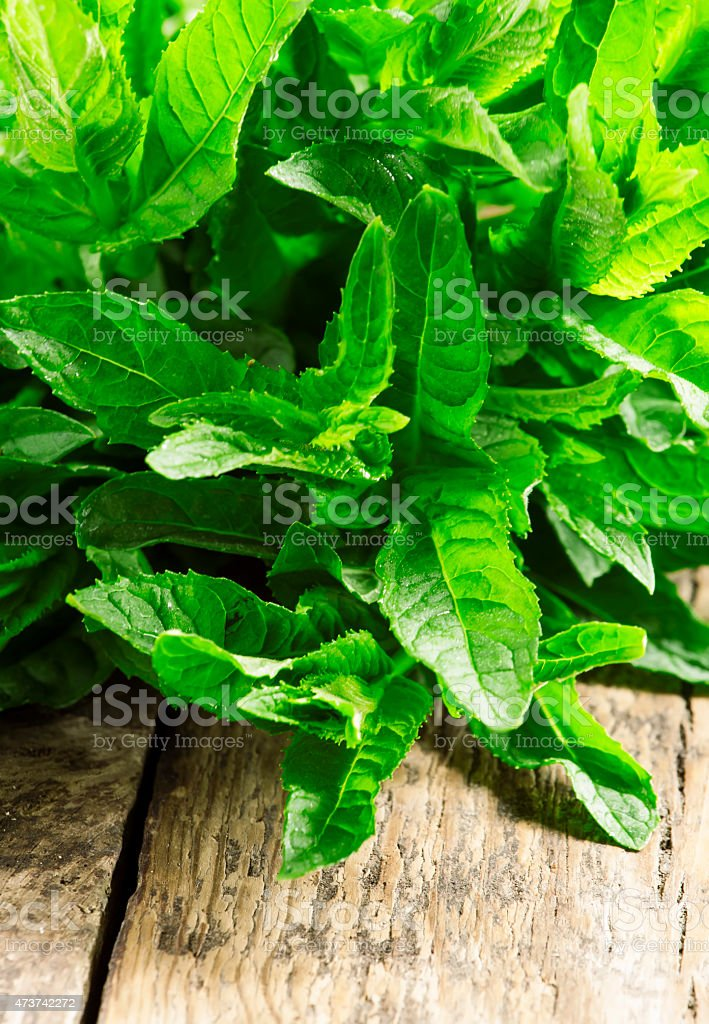 Handfuls of fresh mint laying on a table stock photo
