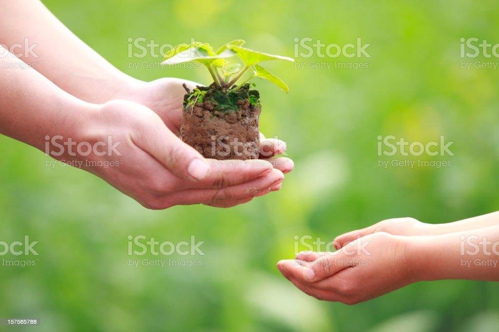 handing plant royalty-free stock photo