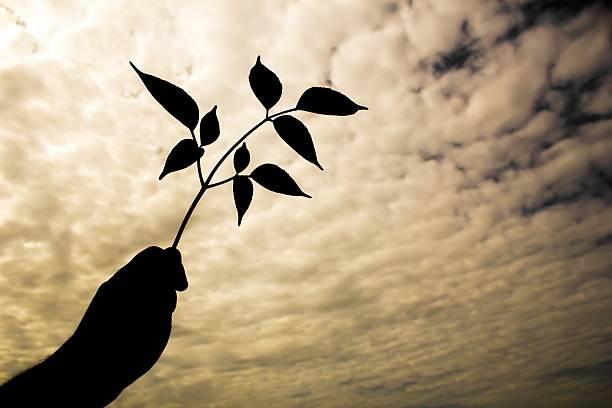 handle leaves on twilight sky in silhouette style - dunkle flecken entferner stock-fotos und bilder