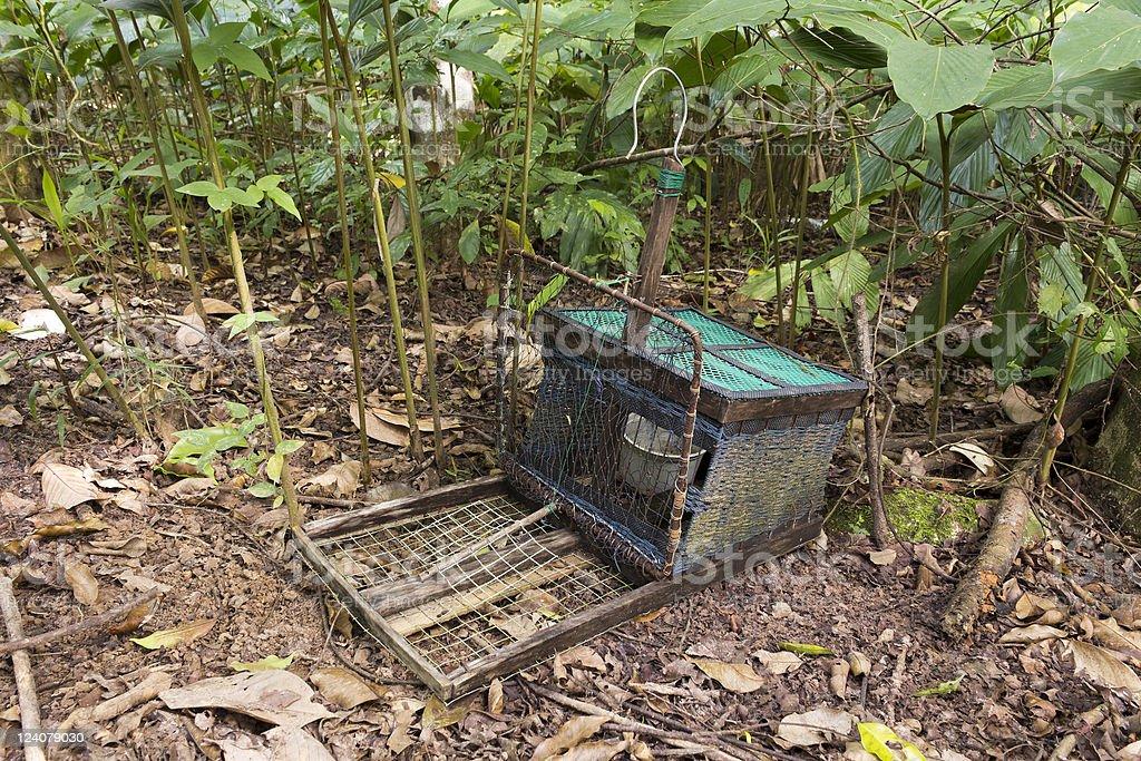 Handmade bird trap stock photo