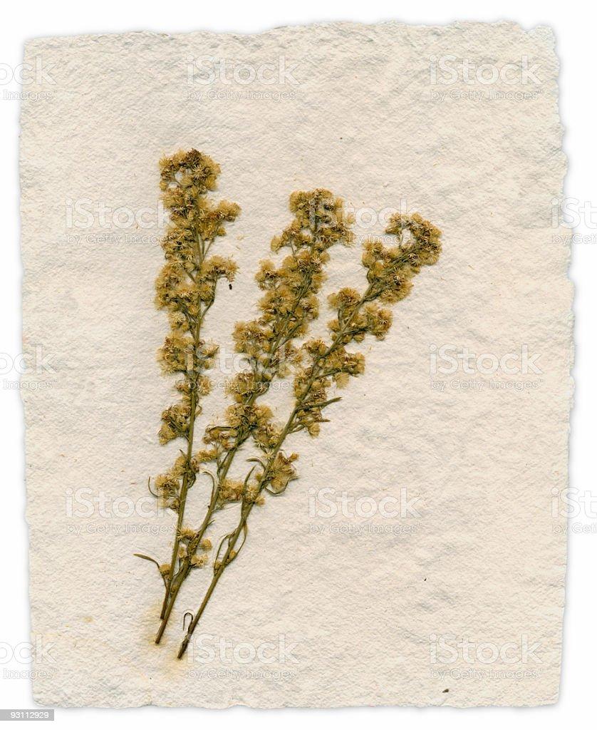 Handmade Paper with Embedded Wildflowers - Royalty-free Beyaz Stok görsel
