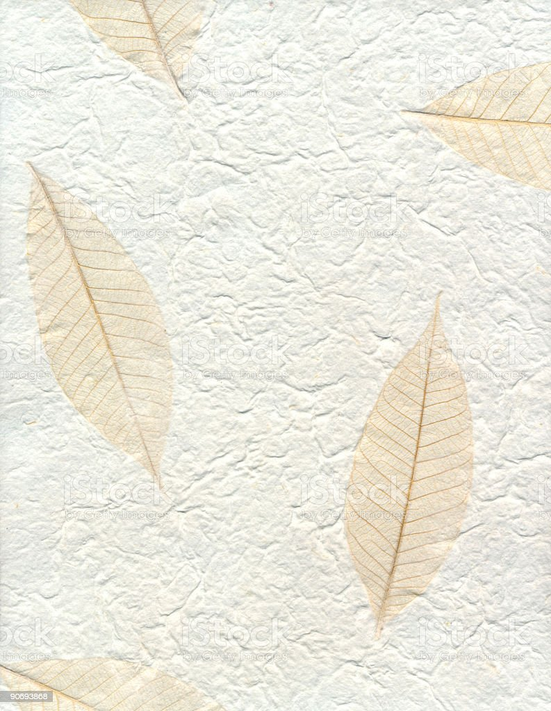 Handmade paper with skeletal leaves stock photo