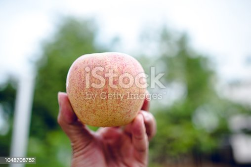 istock Hands and apples of people who love health care. Eating apples with vitamin C, the concept of health care. 1048708752
