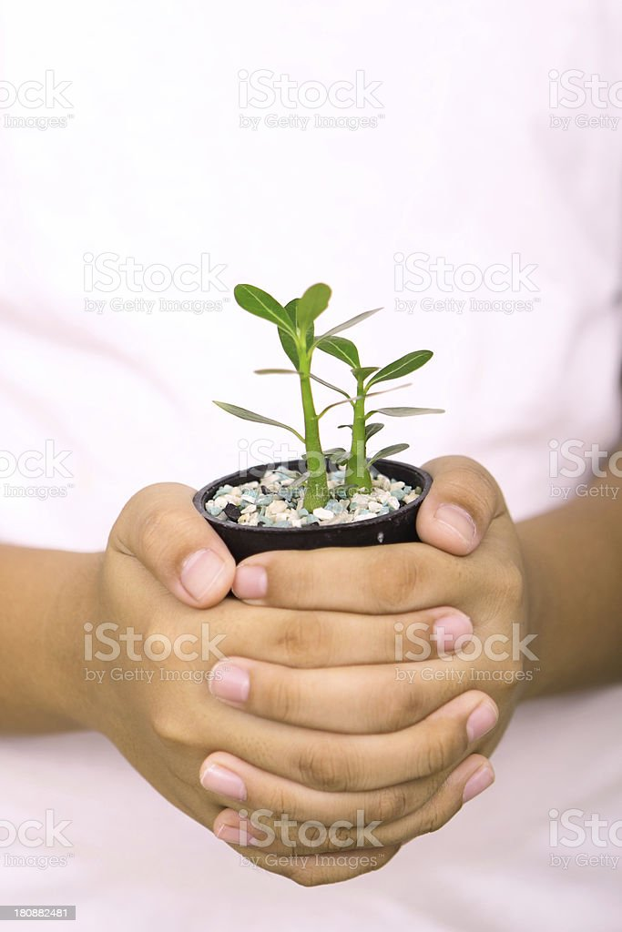 hands and tree royalty-free stock photo