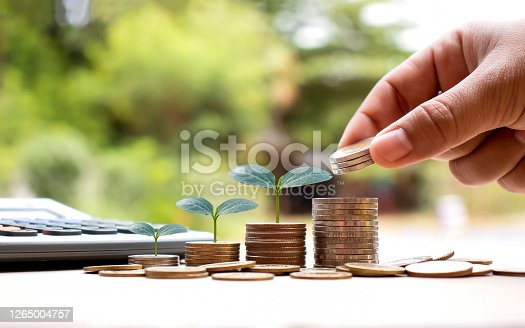 Hands are holding coins, including small tree planting on coins and natural light, financial accounting concepts, and saving money.