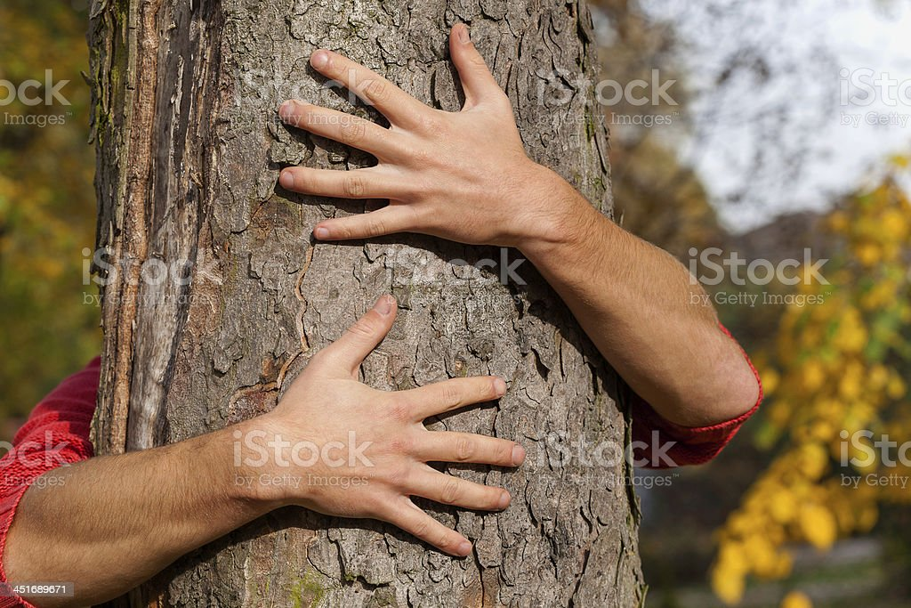 Hände um den Baum – Foto
