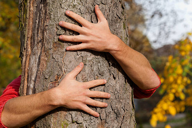 Hands around the tree Man hugging the tree in the park tree hugging stock pictures, royalty-free photos & images
