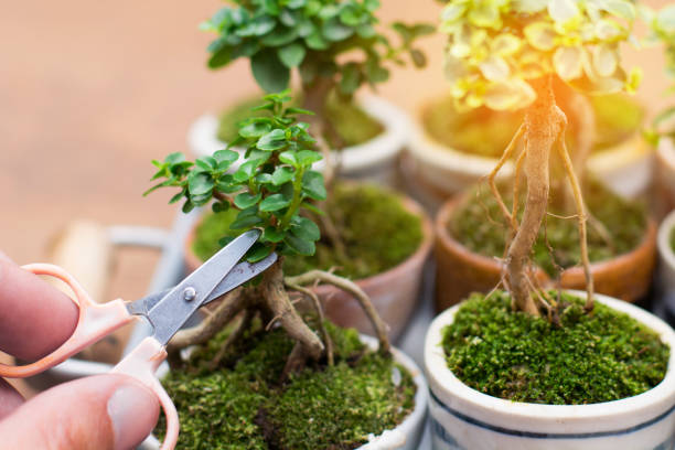 Mains de recadrage petit arbre décoratif - Photo