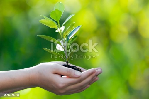Hand holding new tree with green bokeh background in side view. Planting new tree.