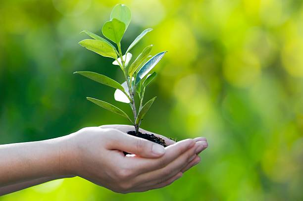 hands cupped together holding a sprouting tree on bokeh back - herbebossing stockfoto's en -beelden