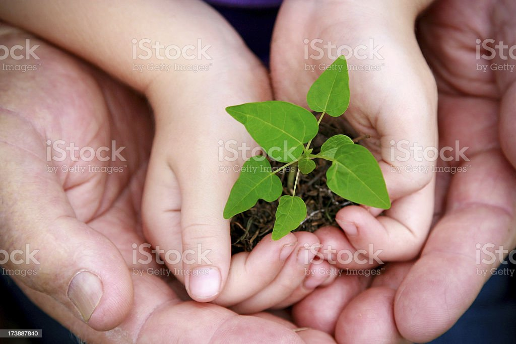 Hands cupping seedling stock photo