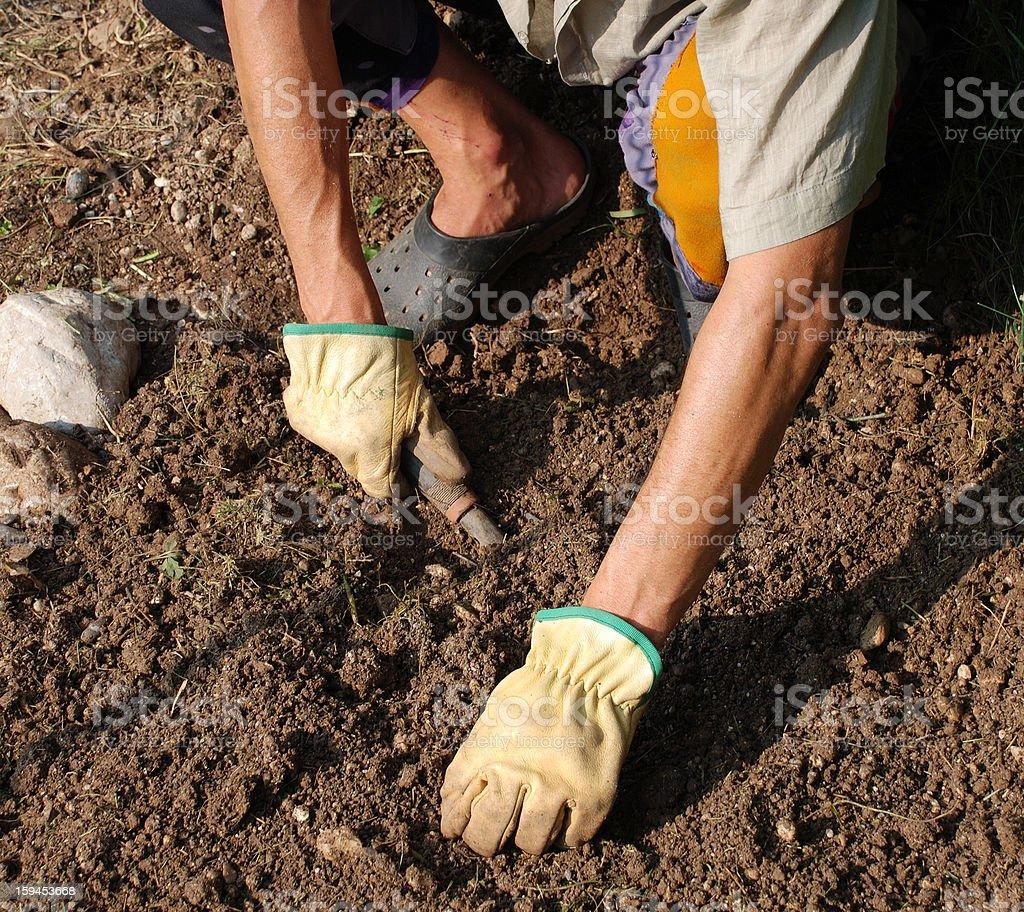 Hands De-Stoning Soil royalty-free stock photo