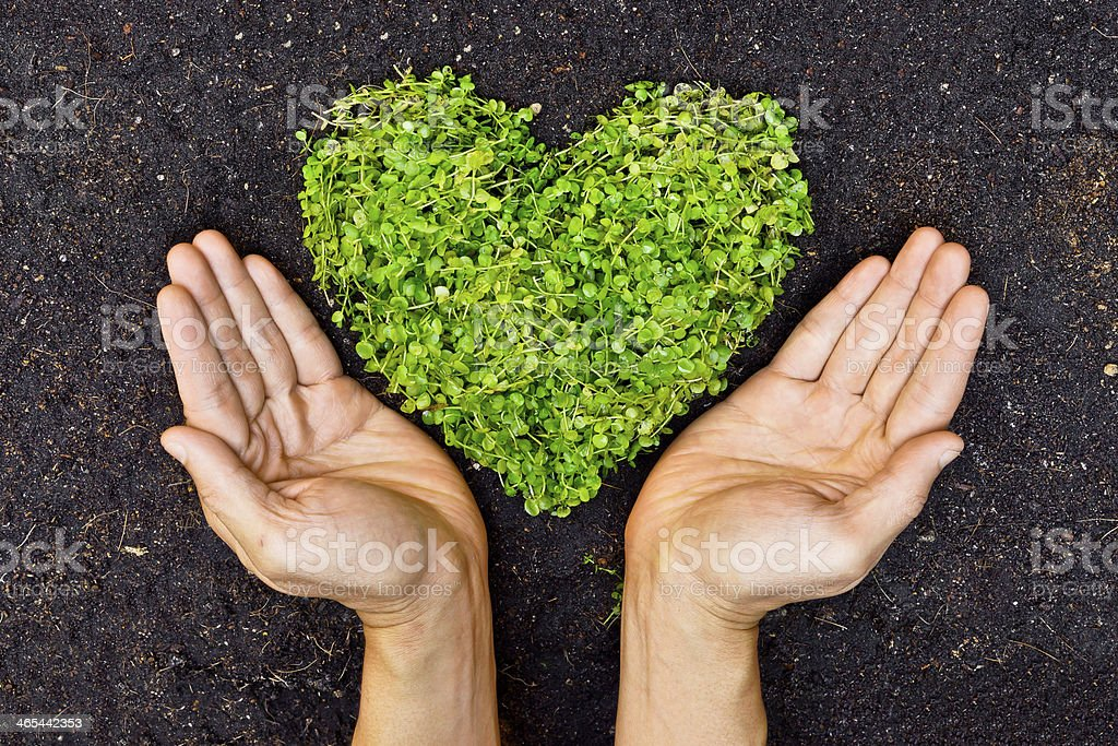 Hands displaying a green, leafy heart stock photo