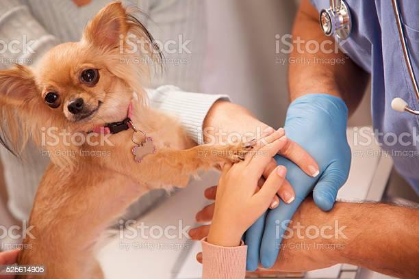 Hands dog paw on top veterinarian pet owners animal hospital picture id525614905?b=1&k=6&m=525614905&s=612x612&h=pvipr3j8rwa0xhscricigx3ae9vbhwzxlo6dxlfbi 0=