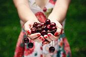 Hands full of cherries.