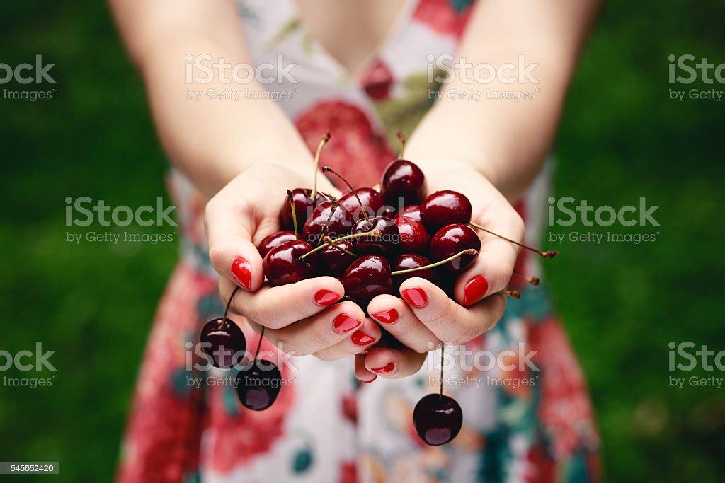 Hands full of cherries. stock photo