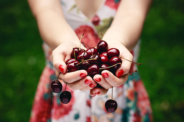 Hands full of cherries. stock photo