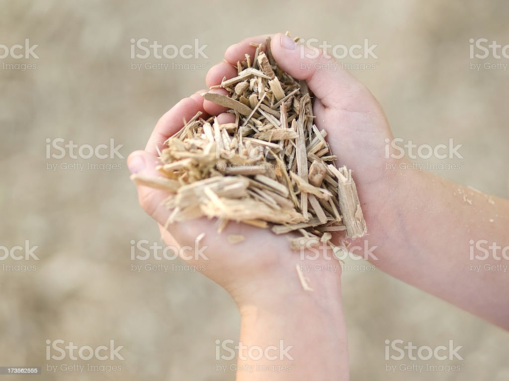 Hands Full of Sawdust stock photo