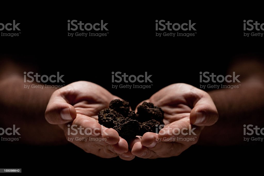 Hands full of truffles over black background stock photo