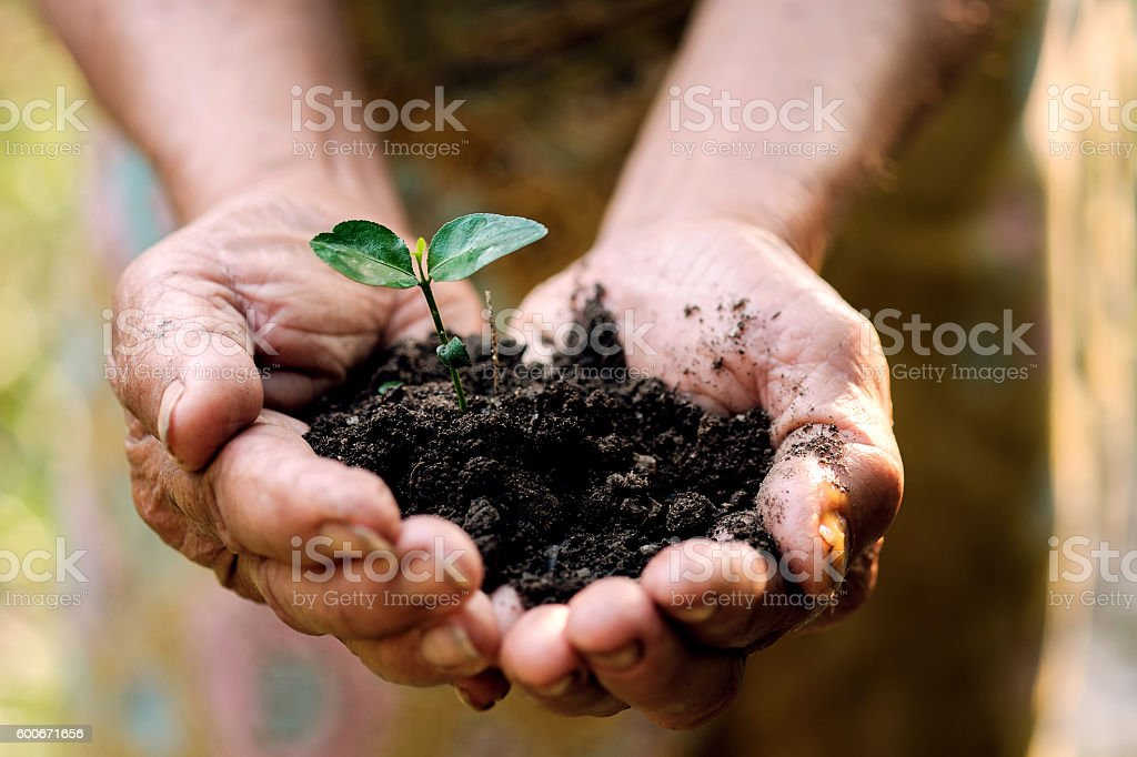 hands gesture hold a little growing plant. stock photo