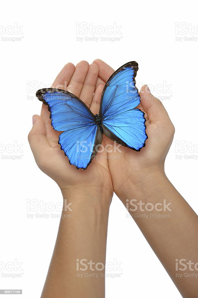 Hands holding a blue butterfly royalty-free stock photo