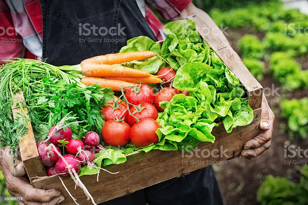 Hands holding a grate full of fresh vegetables​​​ foto